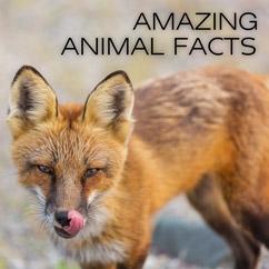 Amazing Animal Fact