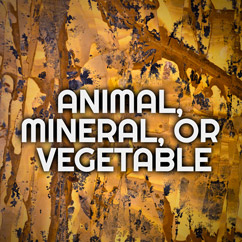 Animal, Mineral, or Vegetable?