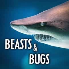 Beasts & Bugs