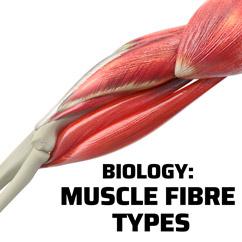 Biology: Muscle Fiber Types