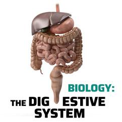 Biology: The Digestive System