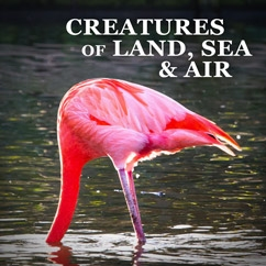 Creatures of Land, Sea & Air