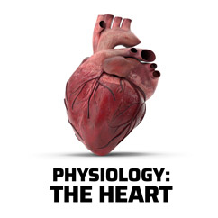 Physiology, The Heart