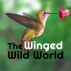 The Winged Wild World