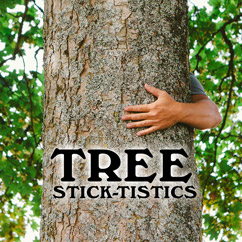 Tree Stick-tistics
